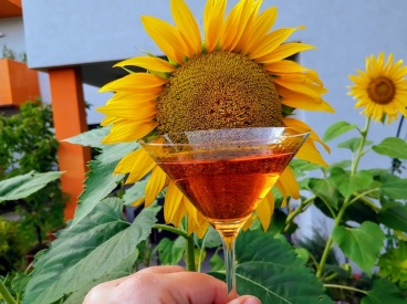 Calvados Sunshine Cocktail 1